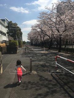 桜並木を通って遊びにの写真・画像素材[1010645]