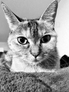 ネコの写真・画像素材[1026956]