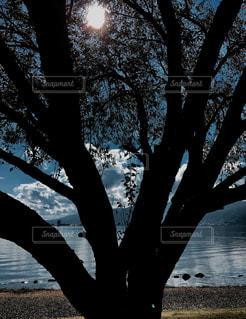 大木シルエットと太陽の写真・画像素材[1011133]