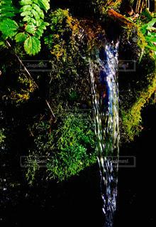 水、湧き水、流れ、の写真・画像素材[1011143]