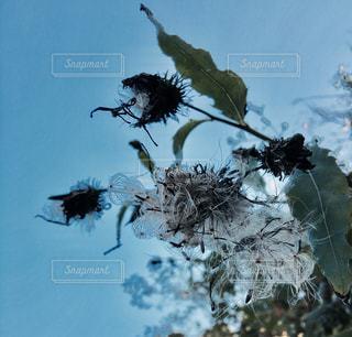 イメージ植物、青の世界の写真・画像素材[1011145]
