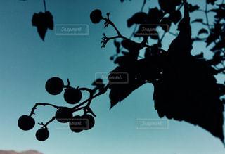 植物イメージ、青の世界の写真・画像素材[1011147]