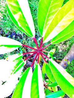 緑色の葉の写真・画像素材[1011247]