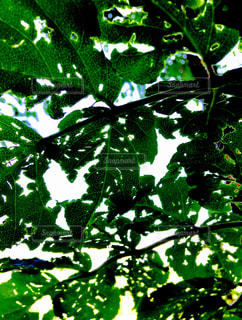 葉のイメージ写真の写真・画像素材[1011248]