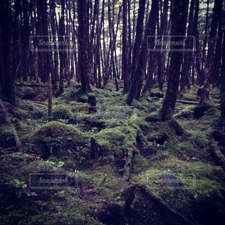 もののけの森の写真・画像素材[1032671]