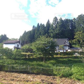 背景の木と大規模なグリーン フィールドの写真・画像素材[1015812]