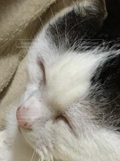 ピンクのお鼻の写真・画像素材[1021207]