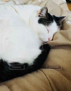 ベッドの上で横になっている猫の写真・画像素材[1023612]