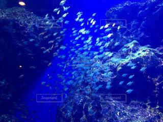 サンゴの水中ビュー - No.1027906