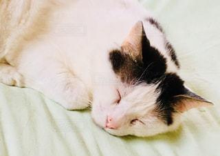 寝ているニャンの写真・画像素材[1228418]