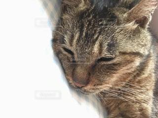 かわいい寝顔の写真・画像素材[1241518]