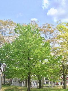 青空と緑の写真・画像素材[2061124]