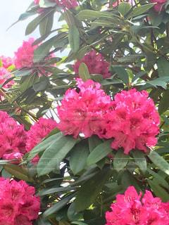 キレイなお花の写真・画像素材[2062431]