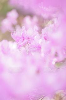 ピンクの世界の写真・画像素材[1136123]