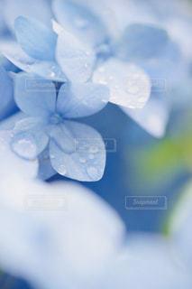 雨上がりの写真・画像素材[2243663]