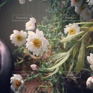 儚げな花かんざし🌼の写真・画像素材[1011895]