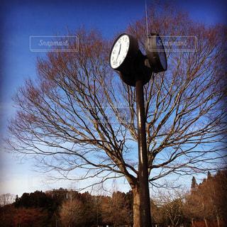 木の正面の時計の写真・画像素材[1012083]
