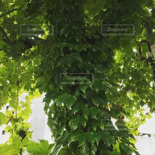 近くの木のアップの写真・画像素材[1012162]