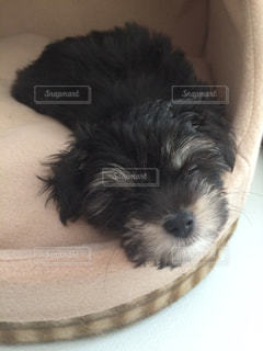 子犬の写真・画像素材[1012994]