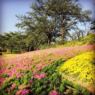 花畑の写真・画像素材[1014650]