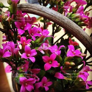 小さなお花🌼の写真・画像素材[1019529]