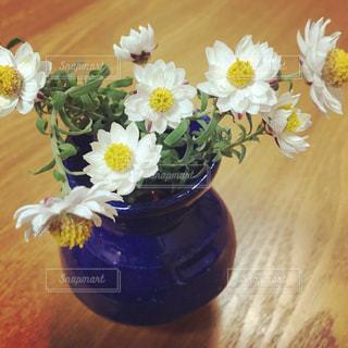 花かんざし🌼の写真・画像素材[1031036]