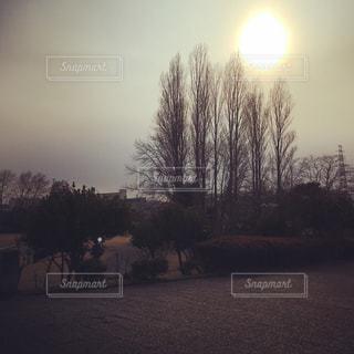 うららかな日差し🌞の写真・画像素材[1052269]