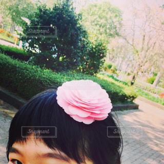 椿姫。の写真・画像素材[1057059]
