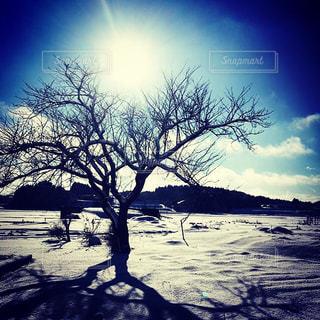 冬の晴れ間❄️の写真・画像素材[1078216]