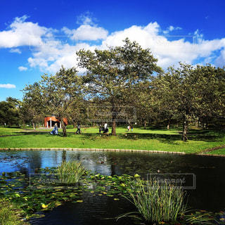 緑豊かな公園☘の写真・画像素材[1078447]