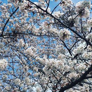 近くの木のアップの写真・画像素材[1116547]