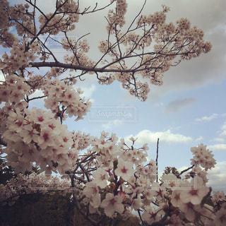 近くの花のアップ - No.1124716