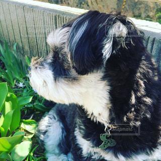 犬がフリスビーで遊んでの写真・画像素材[1140718]