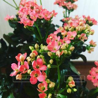 近くの花のアップの写真・画像素材[1142029]