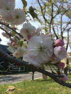 近くの花のアップの写真・画像素材[1143827]