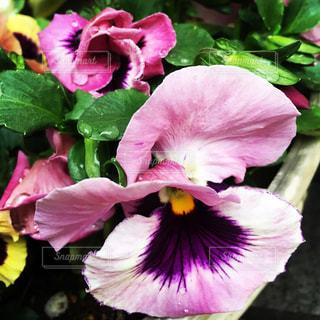 植物にピンクの花の写真・画像素材[1169054]