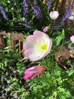 近くの花のアップの写真・画像素材[1202715]