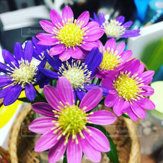 近くの花のアップの写真・画像素材[1213416]
