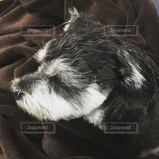 近くに犬のアップの写真・画像素材[1240023]
