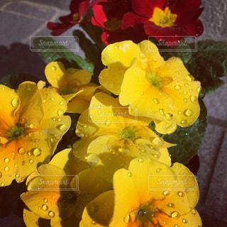 近くの花のアップの写真・画像素材[1668544]