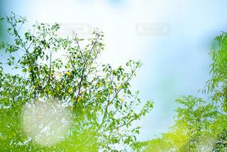 さわやかな景色の写真・画像素材[1011854]