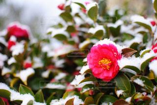 近くの花のアップの写真・画像素材[1011901]