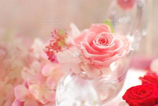 近くの花のアップ - No.1011902