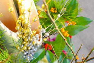 近くの植物のアップの写真・画像素材[1011915]