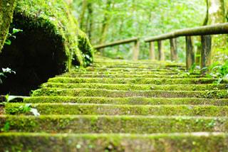 苔の階段 - No.1011954