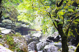 森の中の滝 - No.1011971