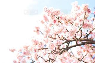 桜と空 - No.1012002