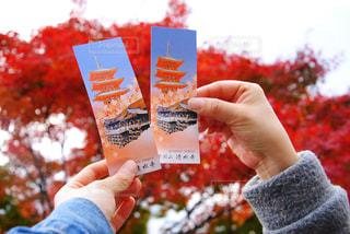 秋の清水寺の写真・画像素材[1012020]