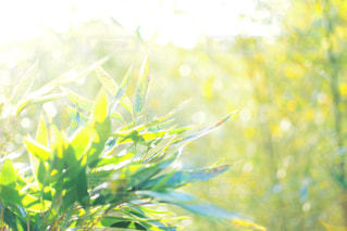 光を浴びる草!の写真・画像素材[1016405]