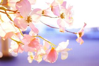 朝日とお花の写真・画像素材[1031369]